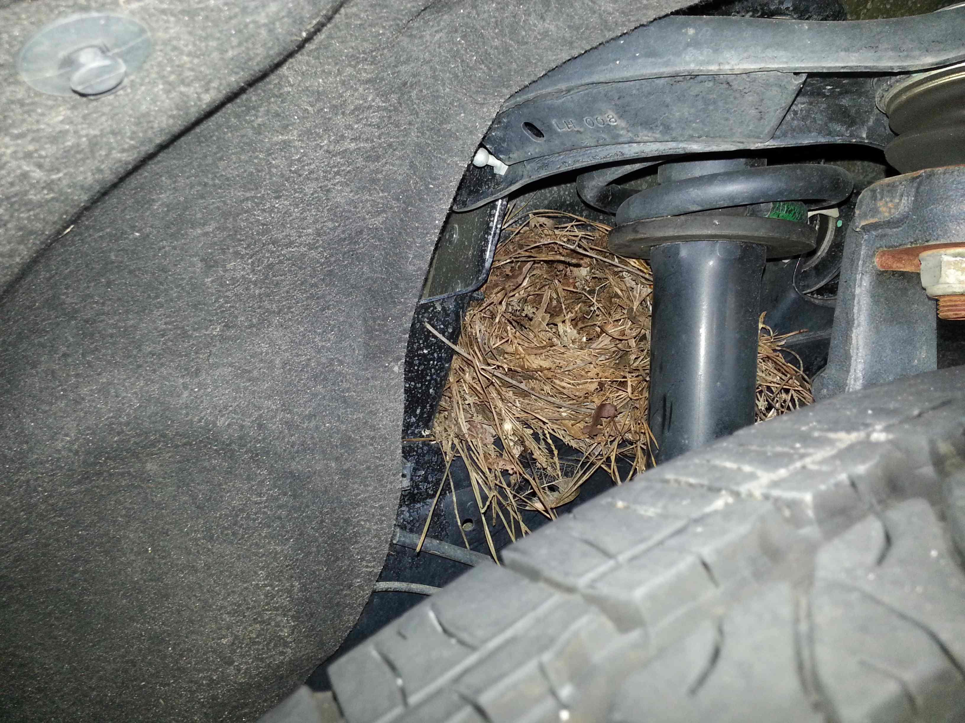 birds-nest-1.jpg