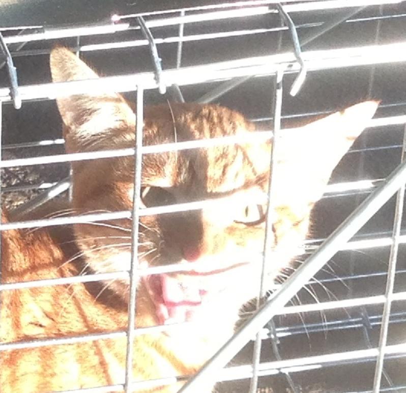 Name:  cat face.JPG Views: 152 Size:  81.5 KB