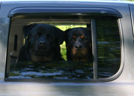 dogs21.jpg