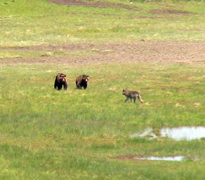 grizzlies-4-.jpg