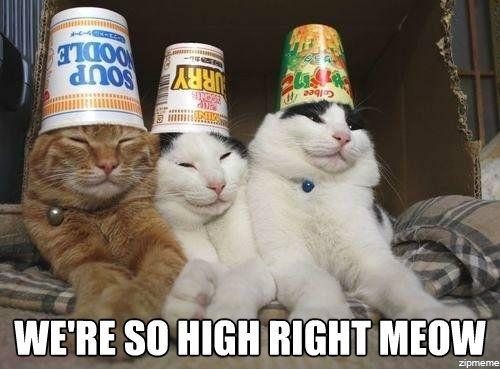 high-cat.jpg