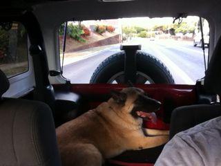 jeep-dog1.jpg