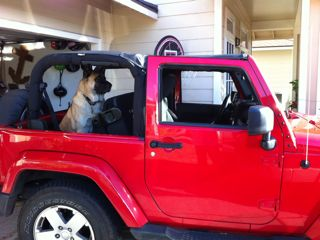 jeep-dog2.jpg