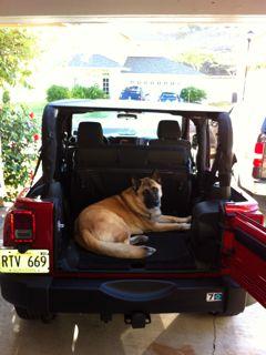 jeep-dog3.jpg