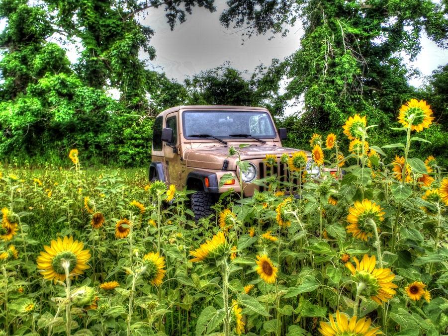 jeep-field.jpg