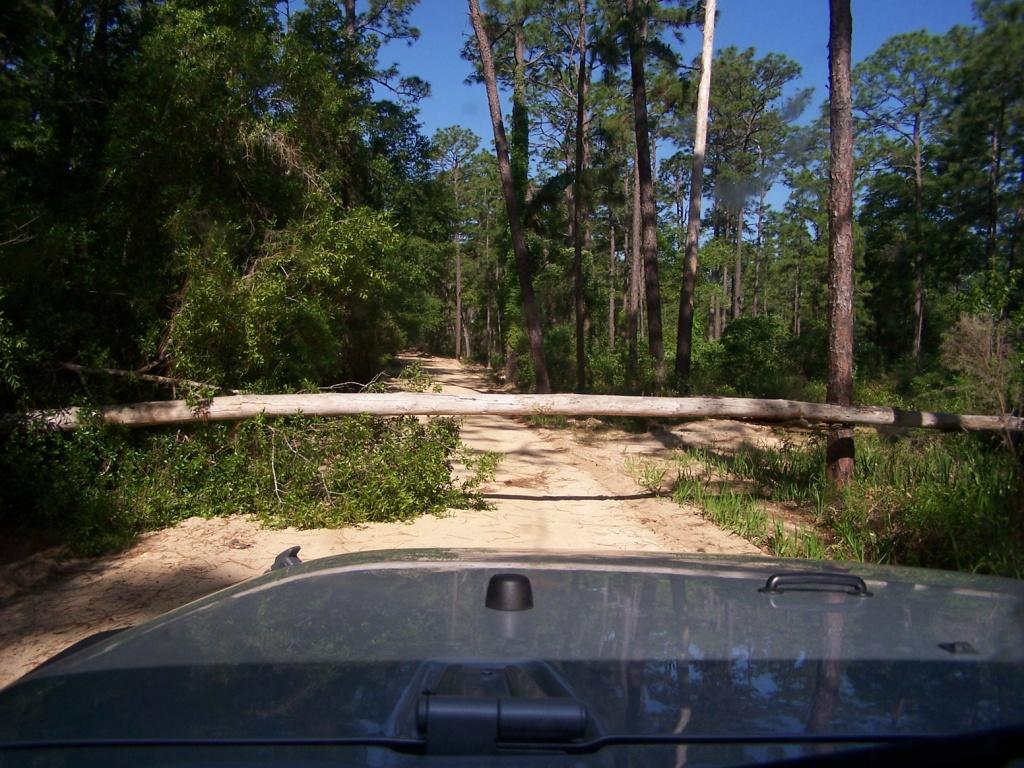 jeep_tree.jpg