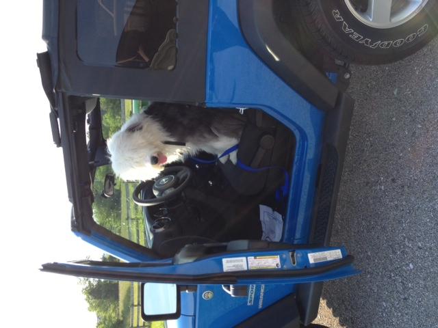 jeepdog.jpg