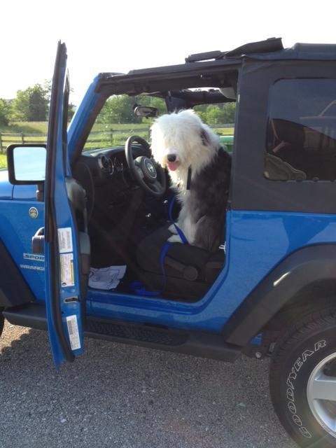 jeepdog_zps8acd10ee.jpg