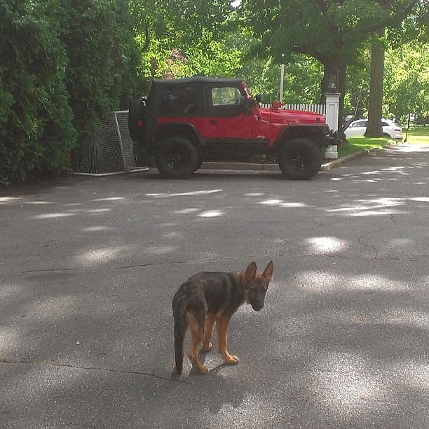 koda-jeep.jpg