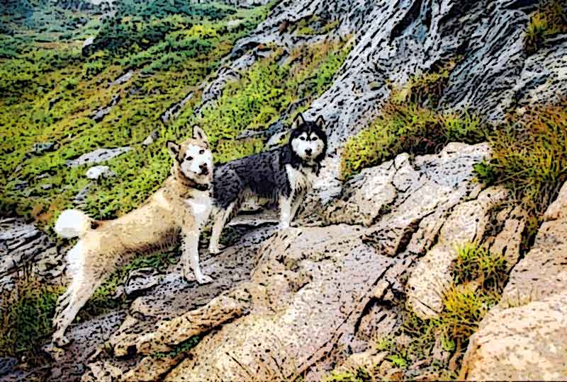 lochlomondhuskies.jpg