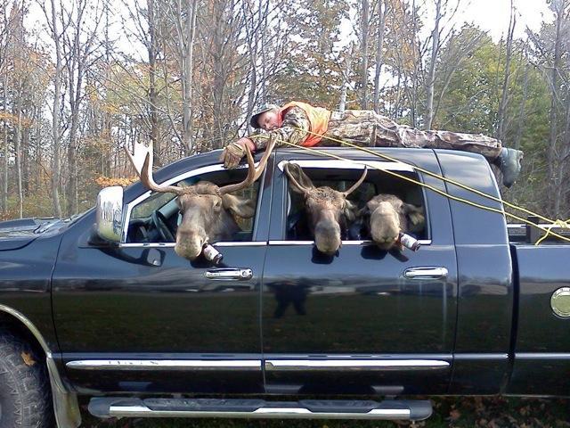 moose-heads.jpg
