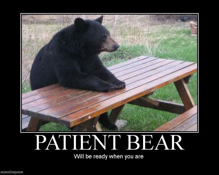 patient-bear.jpg