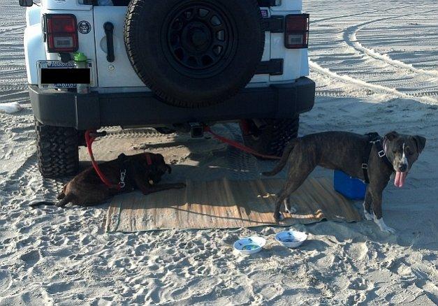 pups-beach.jpg