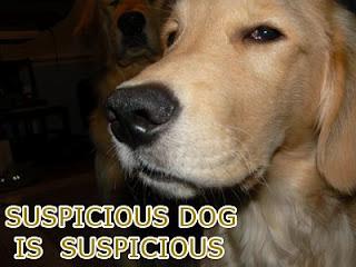 suspicious_dog.jpg