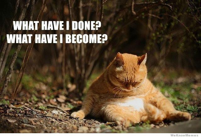 what-cat.jpg