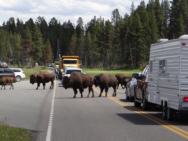 yellowstone-traffic-jam.jpg