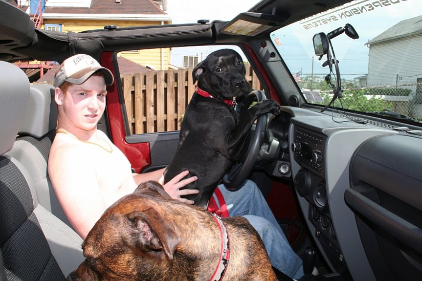 zack-dogs-jeep.jpg