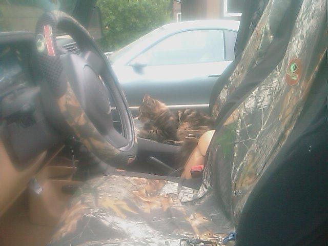 JeepCat.jpg