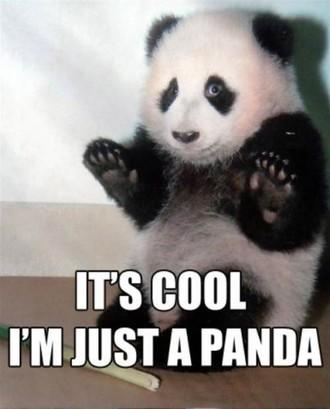 just_a_cool_panda.jpg