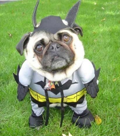 batdog-funny