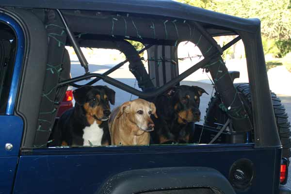 JeepDogs1.jpg