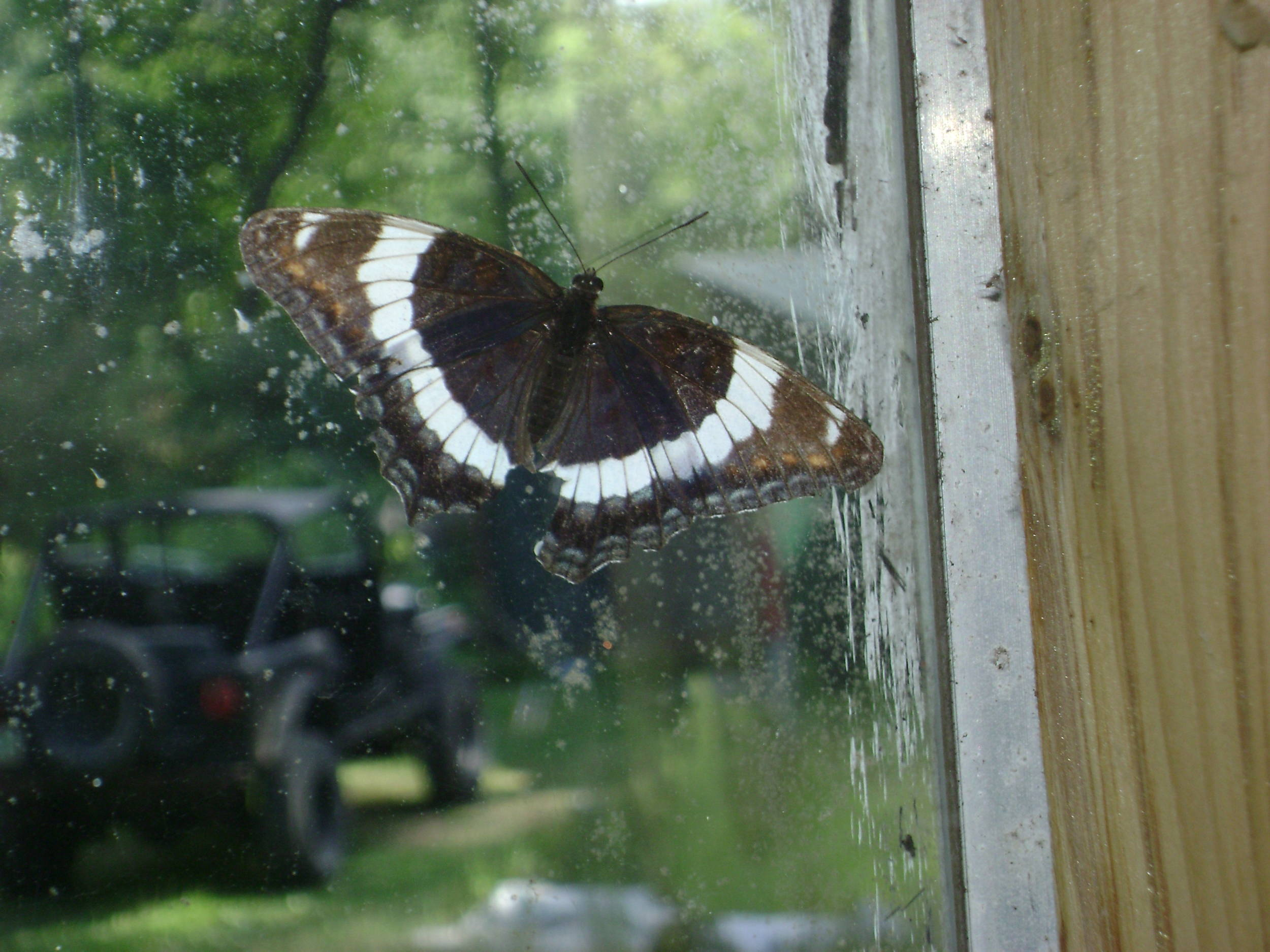 butterfly_029.JPG