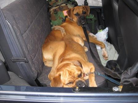 Jeep_Dogs.JPG