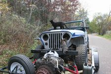 cats-invade.jpg