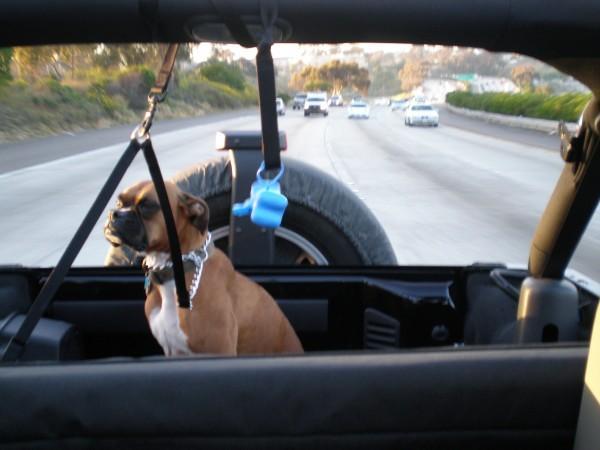 Anna_Jeep.jpg