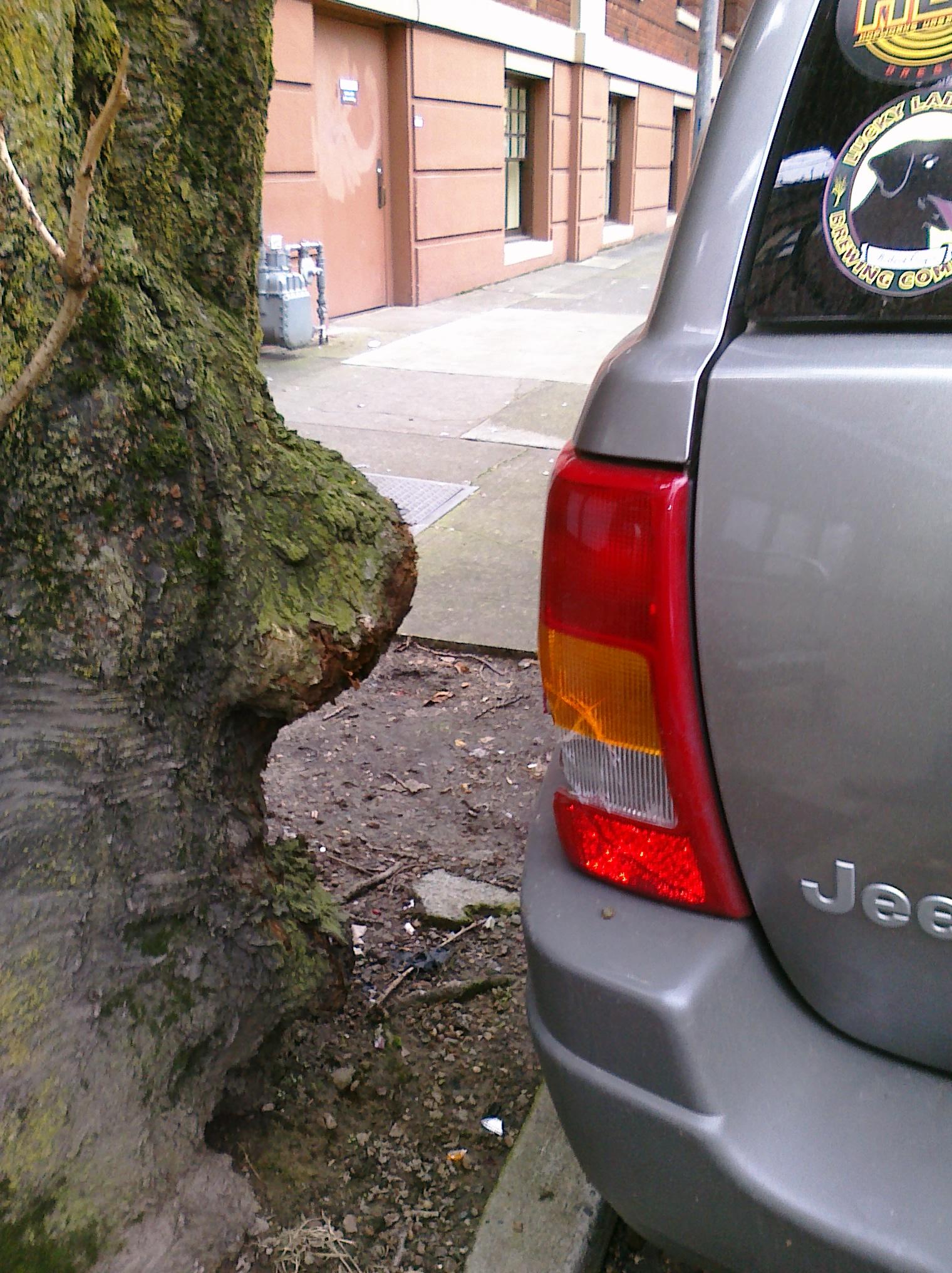 See Tree?